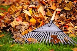 Preparing Your Lawn & Landscape For Winter
